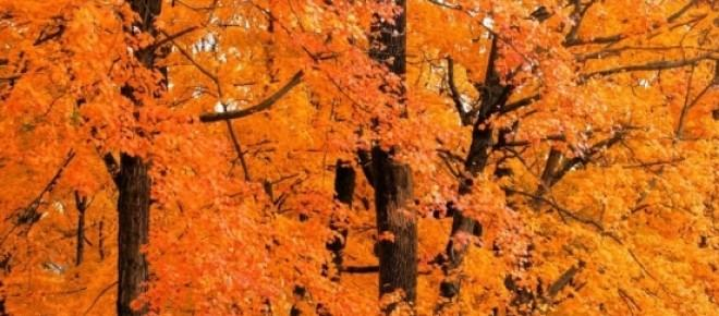Outubro, Primavera e Renascimento.