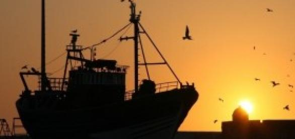 Pescadores dizem que há mais sardinha no mar
