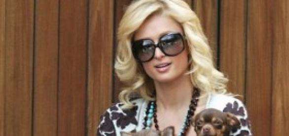 Paris Hilton, Tinkerbell y sus otros dos perros.