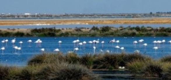 Doñana contiene una gran fauna (visitadonana)