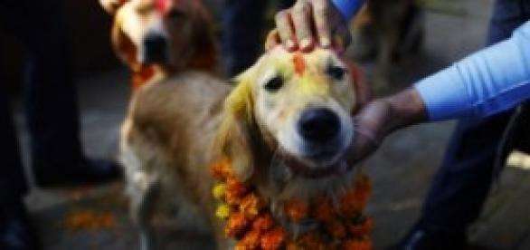 """""""Kukur Tihar"""", día de la adoración al perro"""