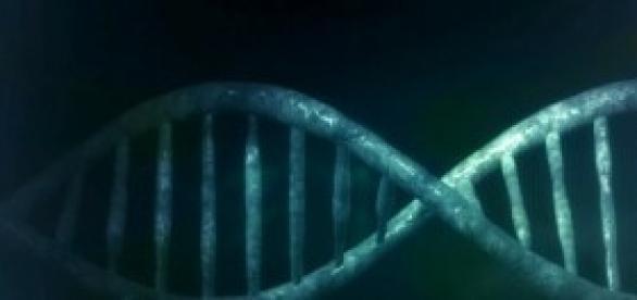 Descubren genes de la violencia