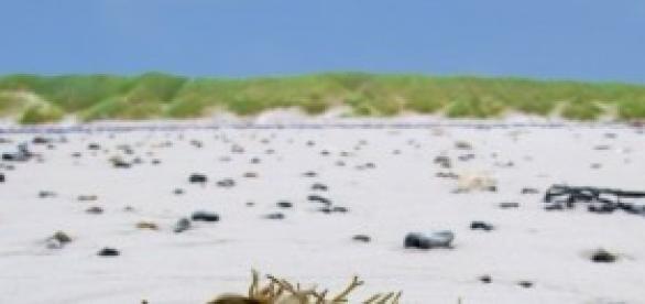 Algacultura, una industria prometedora