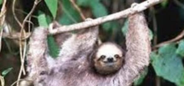 Pessoas se relacionam com o mundo como a preguiça