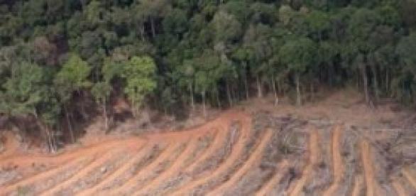 Desmatamento cresce Amazônia