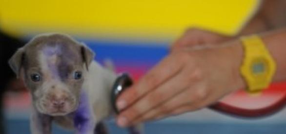 Concurso para médico veterinário