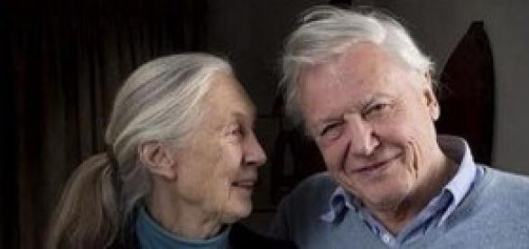 Jane Goodall e David Attenborough