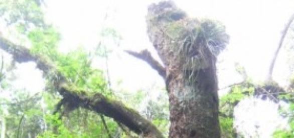 Mesmo morta, os troncos mantém vida.