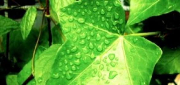 As plantas estão sofrendo com a falta de água