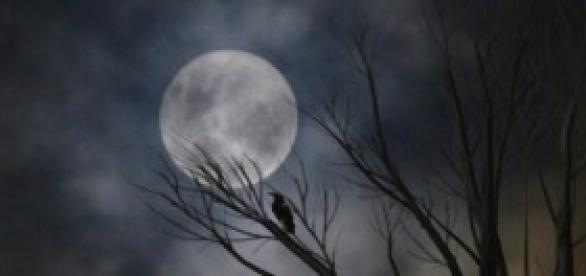 Capaz de reconocer el rostro de la luna