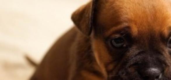 Saiba mais sobre as causas do vômito em cães.