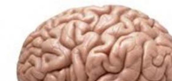 Las zonas cerebrales implicadas son las mismas.