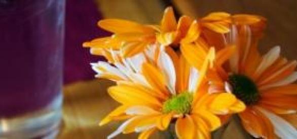 Atraia boas energias com flores e cores
