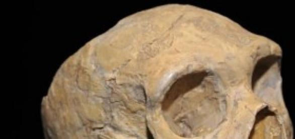 Con fósiles descubren inédito linaje euroasiático