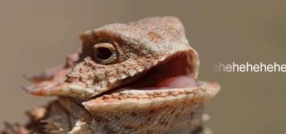 Teremos que aguentar o sorriso do lagarto?