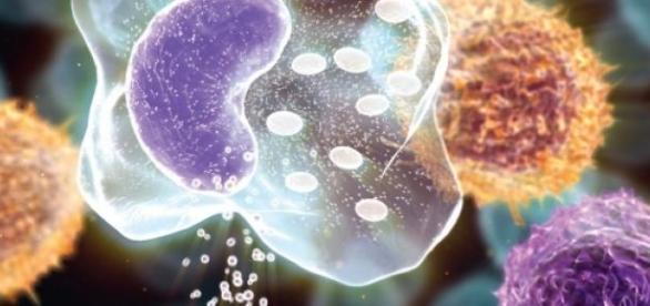 Células tronco: Esperança para muitos