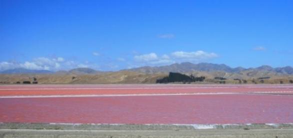 Lago rosa en Senegal, pariente del Hillier