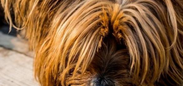 Saiba os sinais que deixam seu cachorro doente