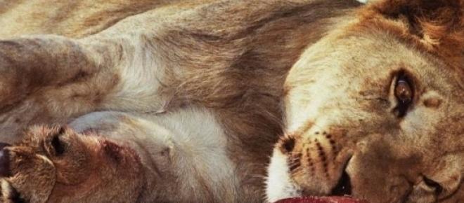 Zoológico de Lújan na Argentina