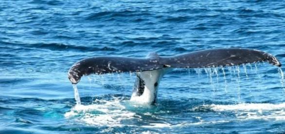 Saiba mais sobre as gigantes das águas brasileiras