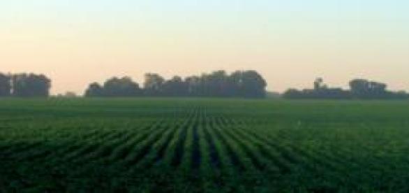 O Brasil é o país que mais consome agrotóxicos