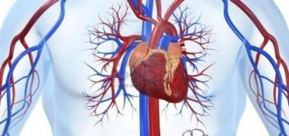 La extracción de plasma y los ataques al corazòn.