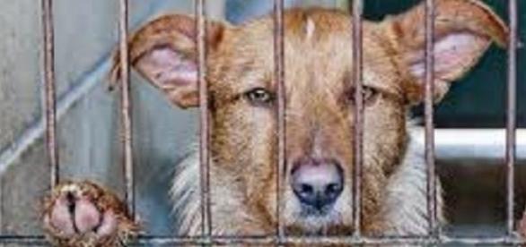Los perros son encerrados en minúsculas jaulas
