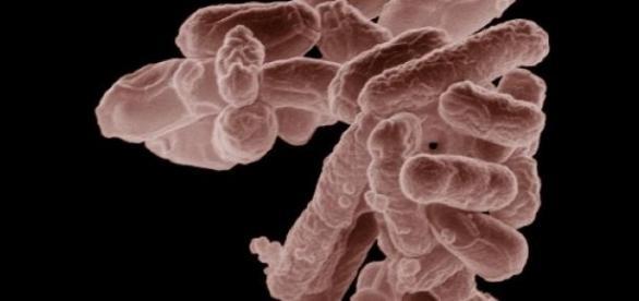 Bactérias: são boas ou ruins para nós