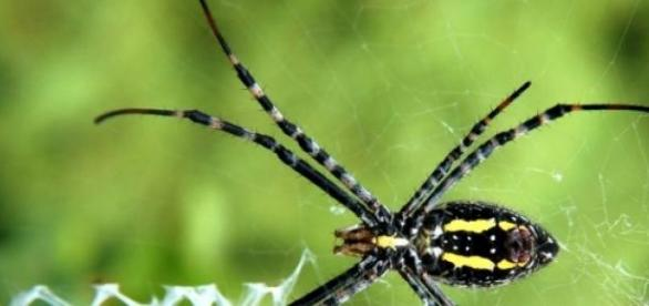 Aracnídeos encontrados no Brasil