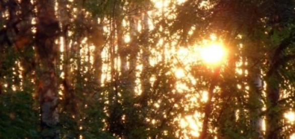 Imagem ilustrativa do por do sol em floresta