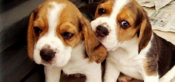 Prohibido, importar perros de menos de 3 meses