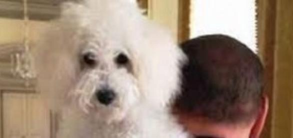Silvio Berlusconi con il cane Dudù