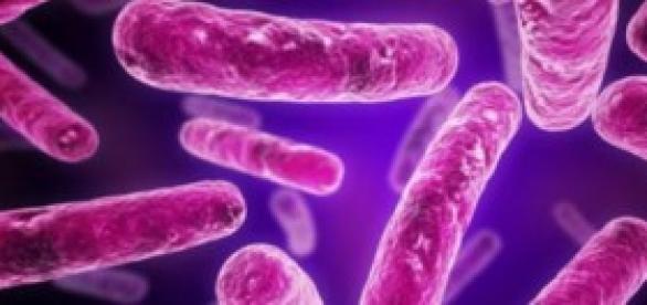 Bacterias Terrestres o Marcianas