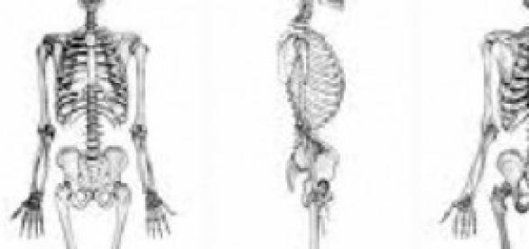 Para fortelecer los huesos, vida saludable