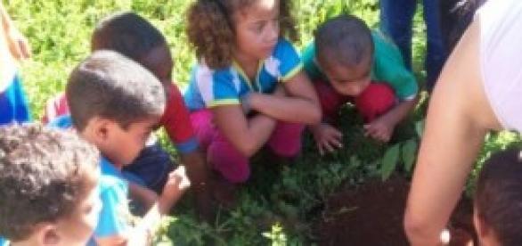 Plantio de mudas com ensino infantil