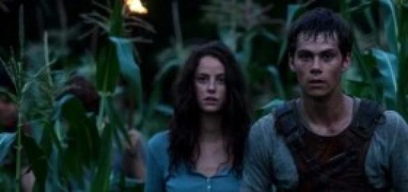 """""""The Maze Runner"""" runs on a good storyline"""