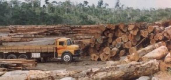 Desmatamento é vergonhoso no Brasil.