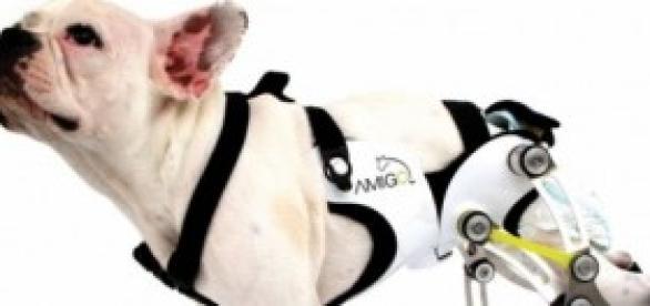 Prótesis para animales domésticos