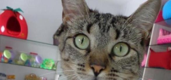 Princesa, uma gata de personalidade - Flavia Buiz