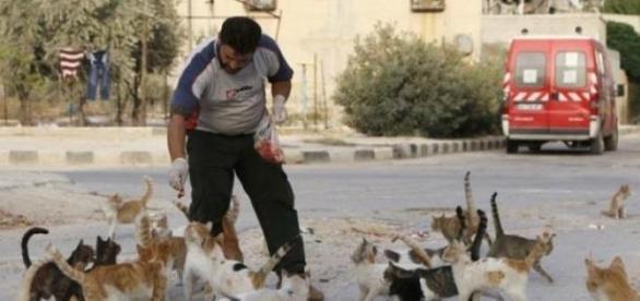 batranii de la bloc aduna pisici