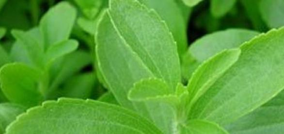 Stevia este un indulcitor natural
