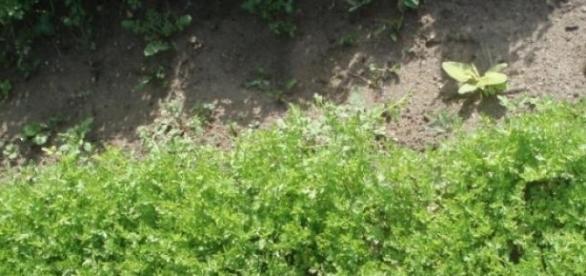 gradina cu plante verzi.....