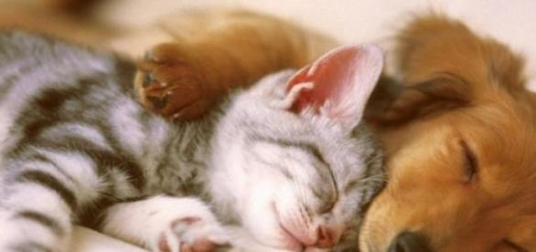 somnul este foarte important