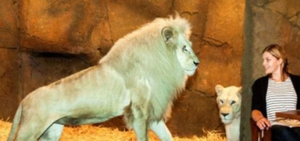 Jamala Wildlife Lodge, un hotel inedit