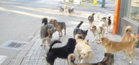 Cainii maidanezi, o problema in Romania?