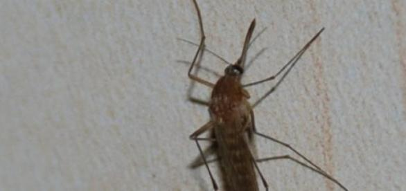 intepaturi de insecte  tantari ,muste ,albie ....