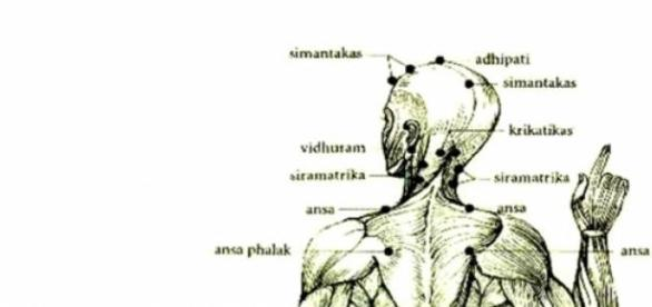 Os pontos marma, uma forma de saúde e equilíbrio