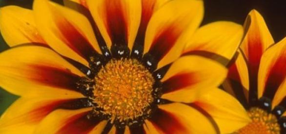 Florile galbene sunt minunate