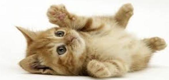 Pisica, cel mai bun prieten al omului!