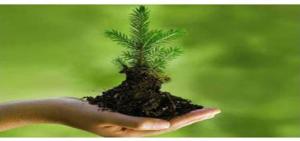 A oportunidade na área ambiental está em suas mãos